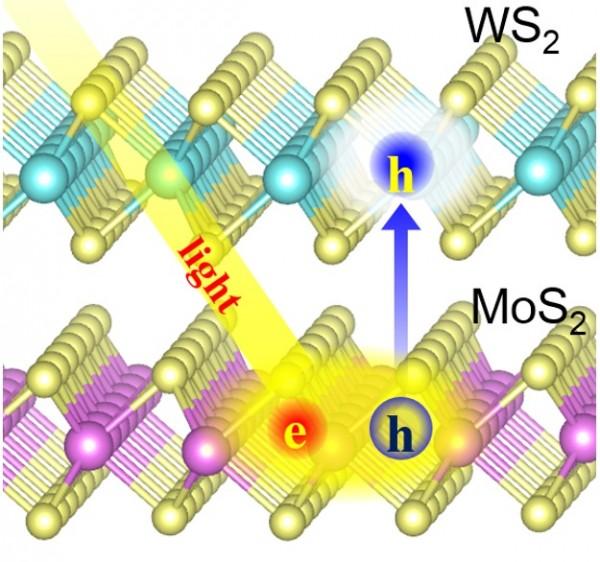 연구진은 황화몰리브덴(MoS2)과 이황화텅스텐(WS2)이 접합된 이차원 나노 물질이 빛을 받으면 활성화된 정공(h)이 양자역학적으로 두 물질에 동시에 존재하다가 안정한 이황화텅스텐으로 이동한다는 사실을 규명했다. - 한국기초과학지원연구원 제공